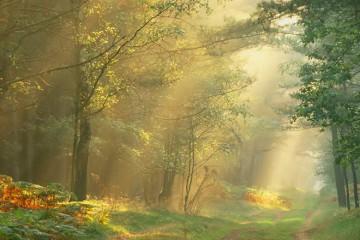 maconaria-uma-grande-floresta